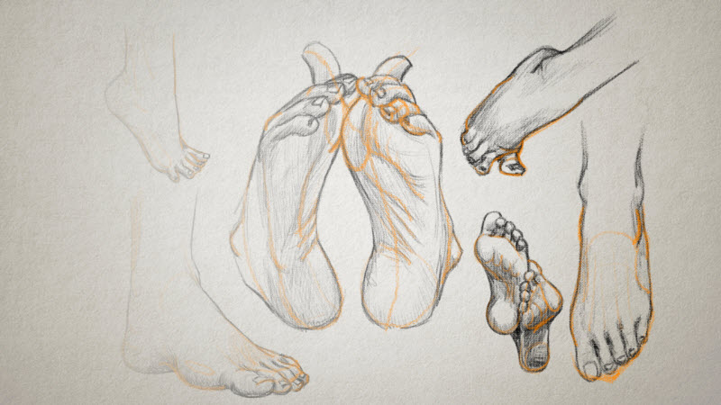 drawings of human feet in different positions