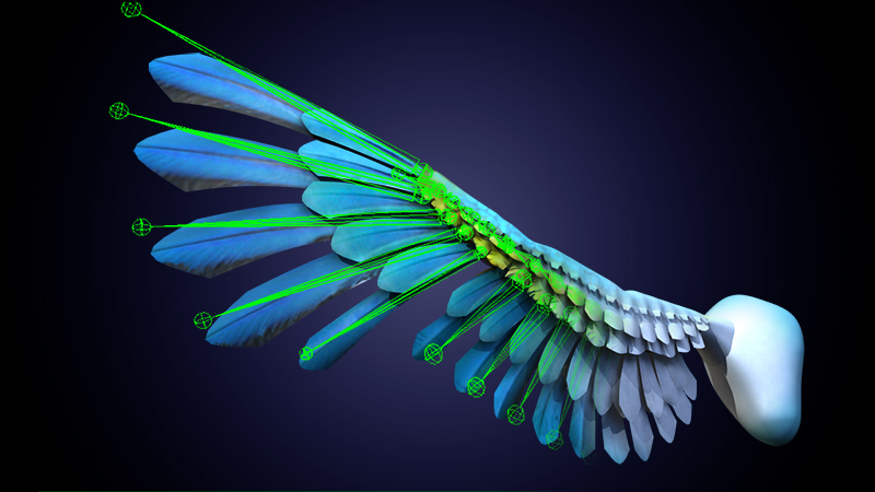 Rigging a bird wing in 3ds Max or Maya