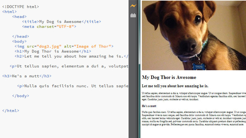 Image of dog website