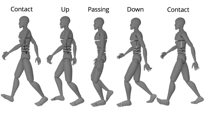 Walk Cycle Animation Chart showing contact, up, passing, down