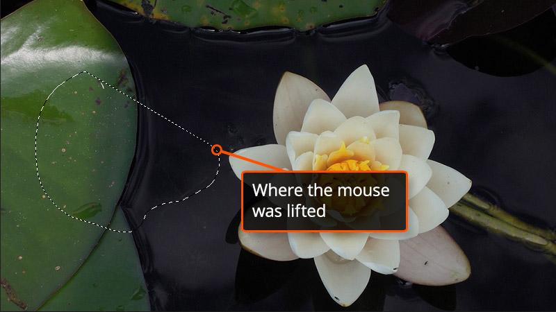 Example of Lasso Tool in Photoshop
