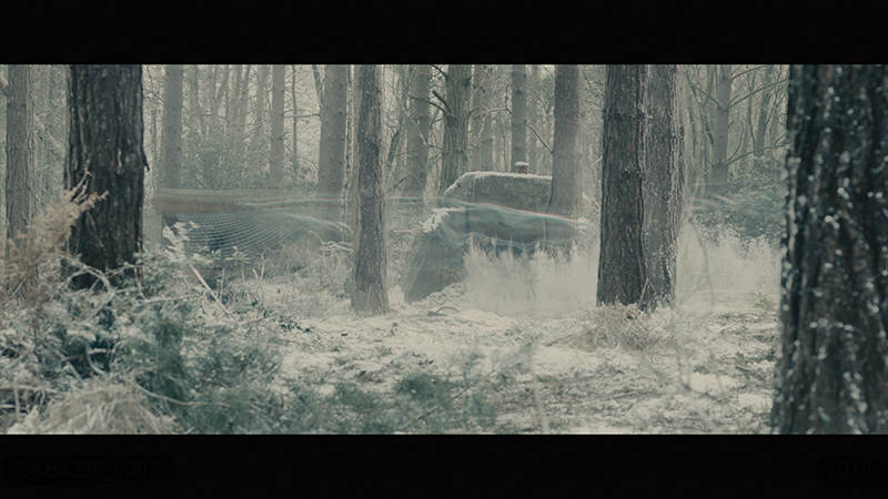 QS_woods